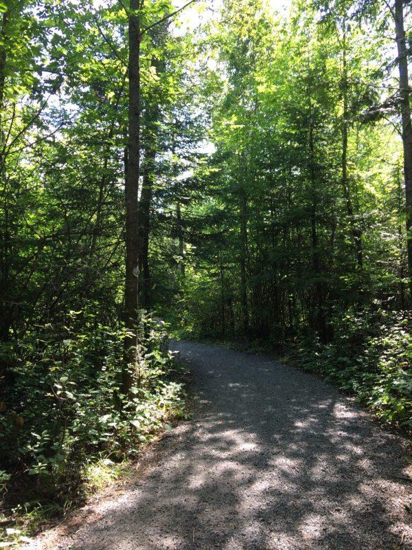 Rebecca-forest
